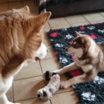 Laika begrüßt unser neues Familienmitglied Tara❤